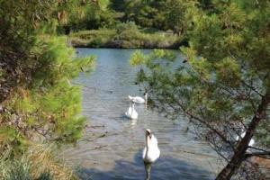 Pont 5 - Rezervația Strofilia